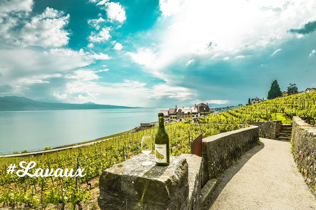 Lavaux Protected site by UNESCO